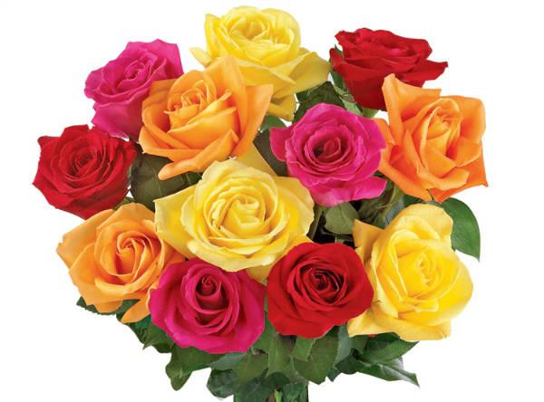 Rosas importadas com desconto